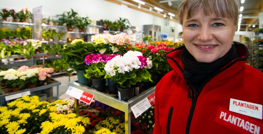 Viherkasveja myydään tasaisesti ympäri vuoden